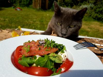 Salade et chat